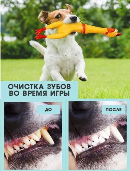 набор для щенков 1